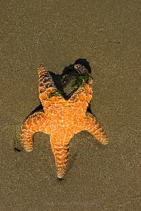 Slow Orange