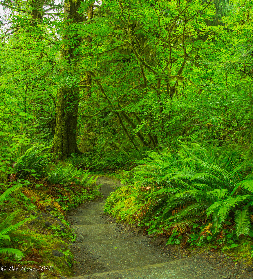 Hall of Mosses, Hoh River Rain Forest, No. 2