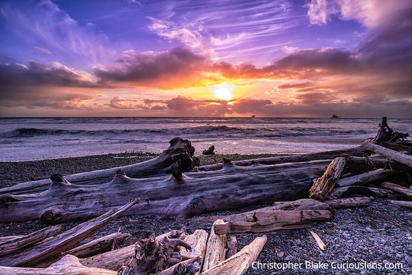 Rialto Beach Sunset and Trees