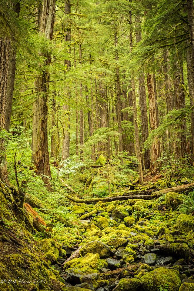Sol Duc Rain Forest