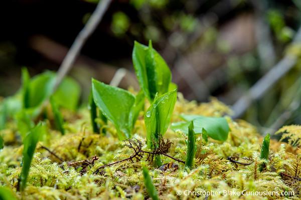 Macro Leaves in Hoh