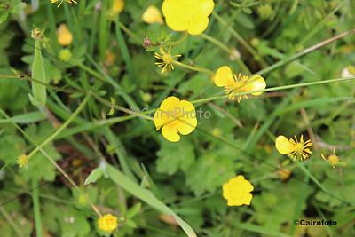Yellow Macro