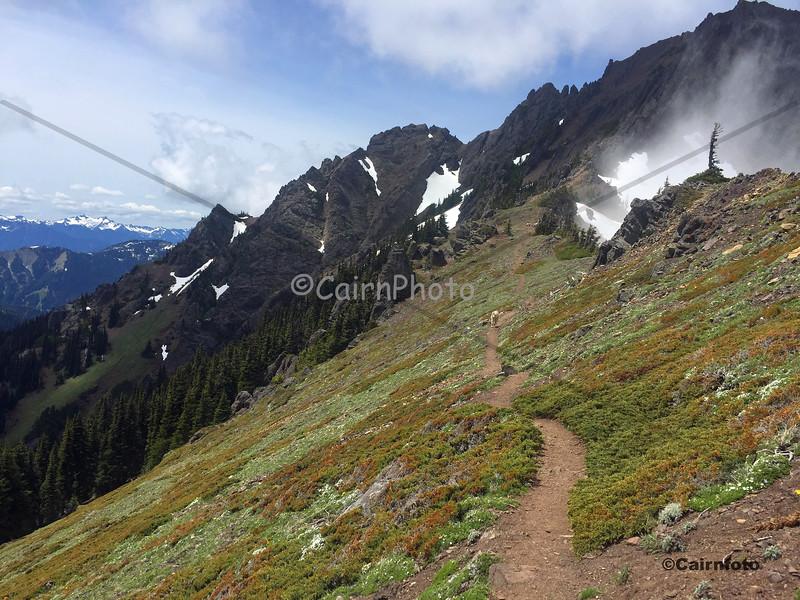 Klahhane Ridge Trail with goat