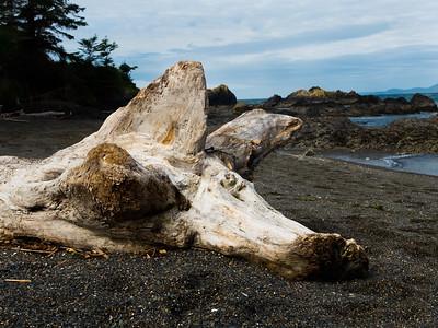 Driftwood at Rosario Beach, WA