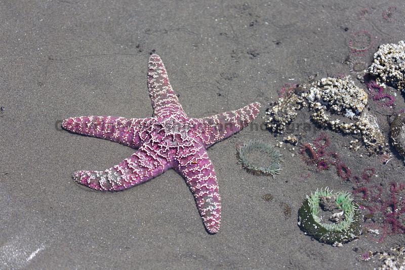 Ocean Beachcombing 54
