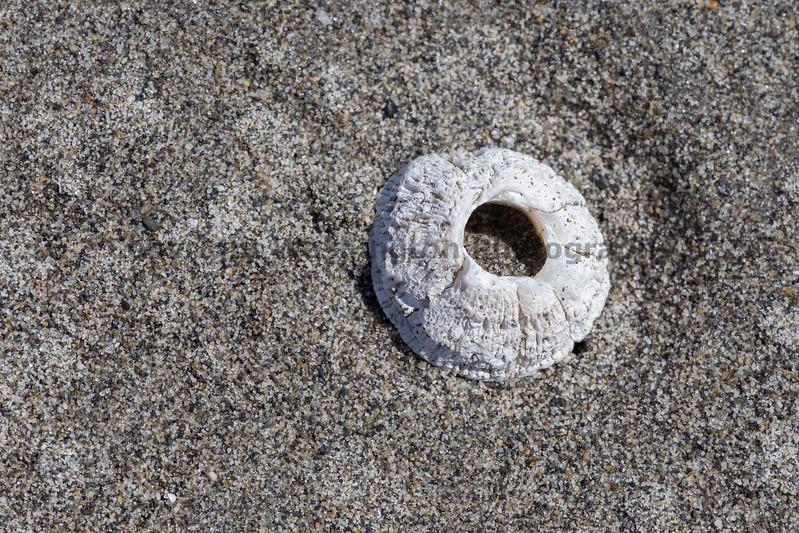 Ocean Beachcombing 23