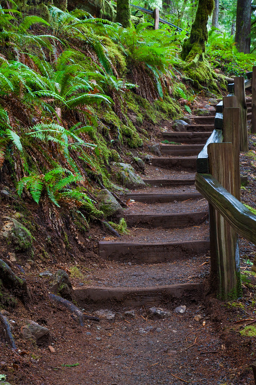 Staircase to Marymere Falls, North Olympic Peninsula, WA