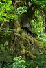 Hoh Rain Forest 123
