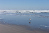 Kalaloch Beach 16