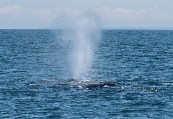 Two humpbacks