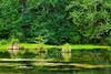 Hoh Rain Forest 46