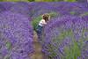 Lavender Farm 105