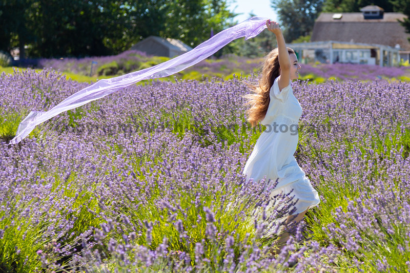 Lavender Farm 346
