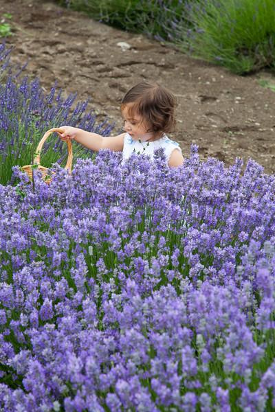 Lavender Farm 127