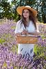Lavender Farm 258