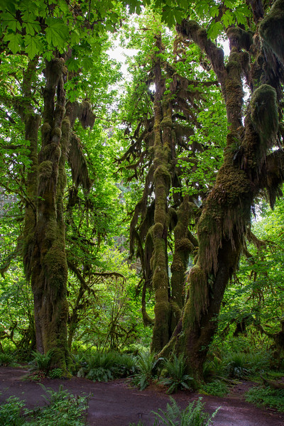 Hoh Rain Forest 138