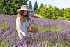 Lavender Farm 253