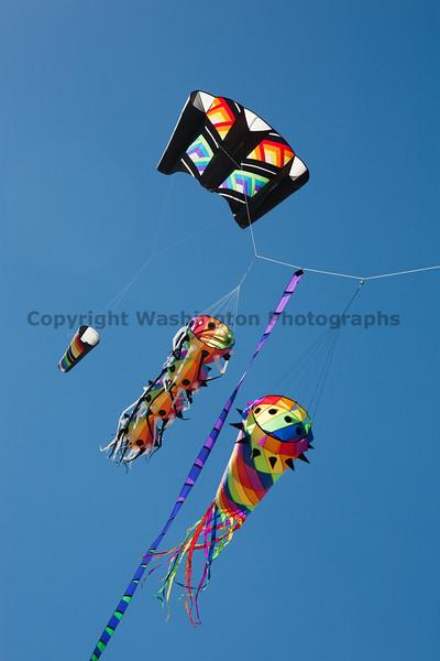 Long Beach Kite Festival 54