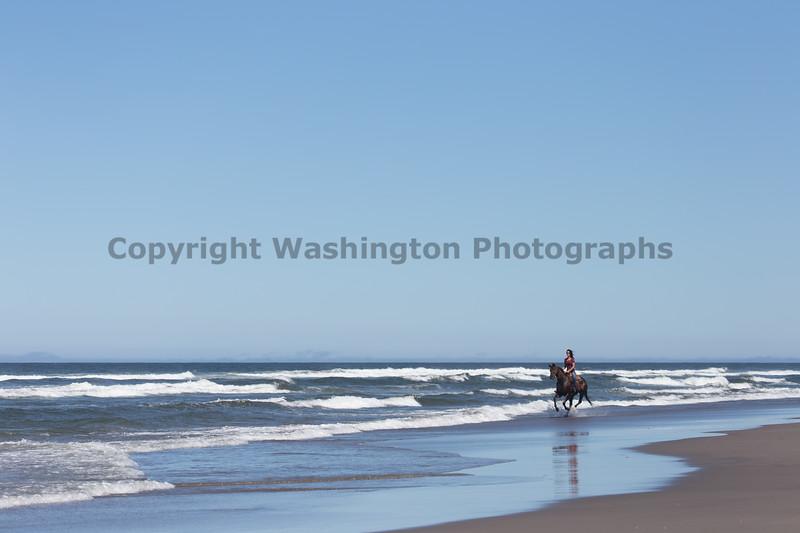 Long Beach Horseback Riding 33