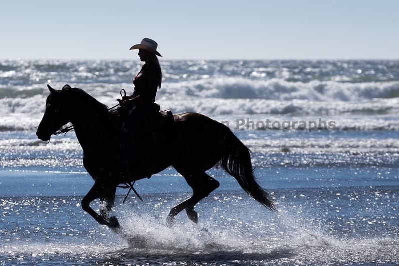 Long Beach Horseback Riding 37