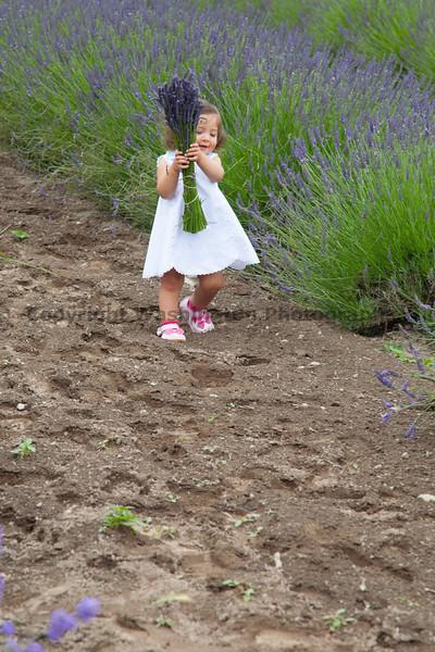 Lavender Farm 131