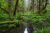 Hoh Rain Forest 165