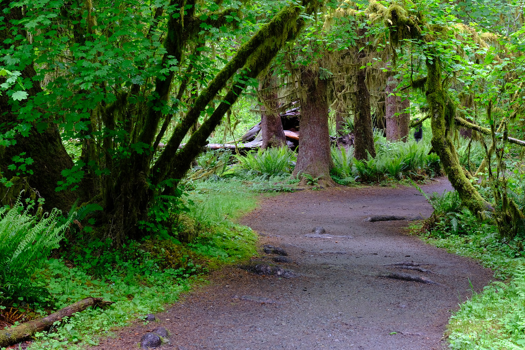 Hall of Mosses - Hoh River, WA