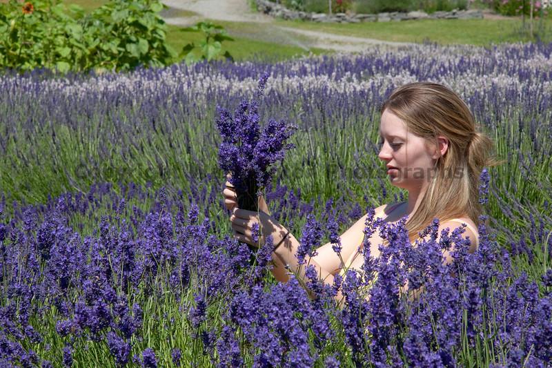 Lavender 06