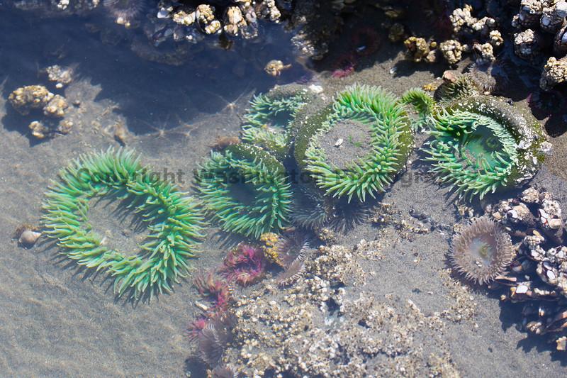 Ocean Beachcombing 53