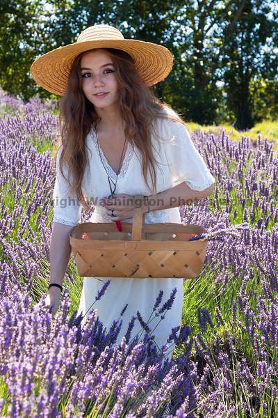 Lavender Farm 260