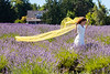 Lavender Farm 355