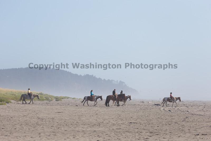 Long Beach Horseback Riding 10