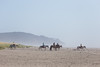 Long Beach Horseback Riding 10