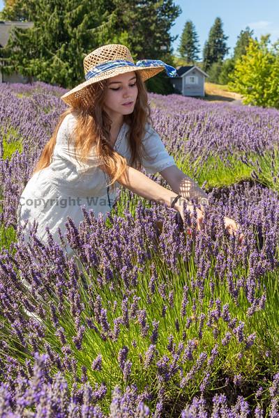 Lavender Farm 257