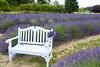 Lavender Farm 71
