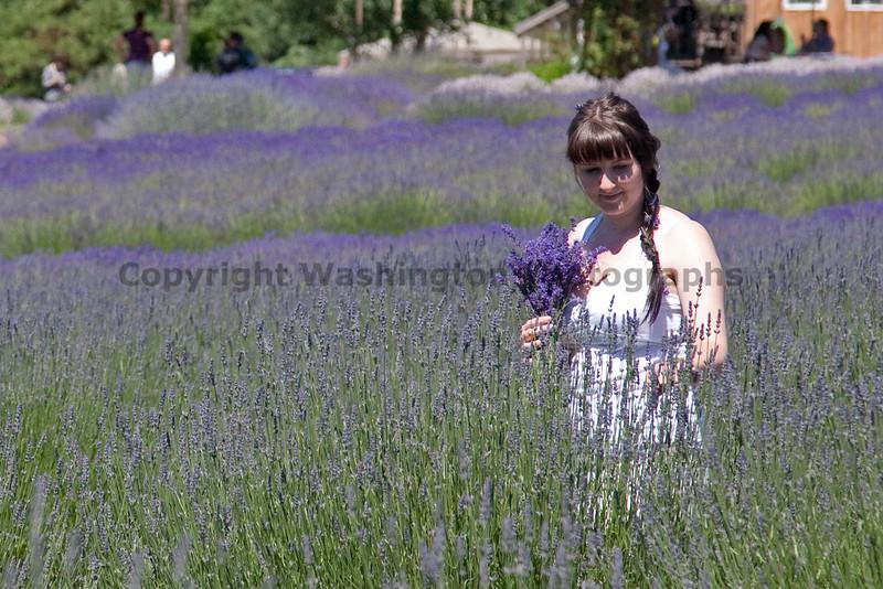 Lavender 20