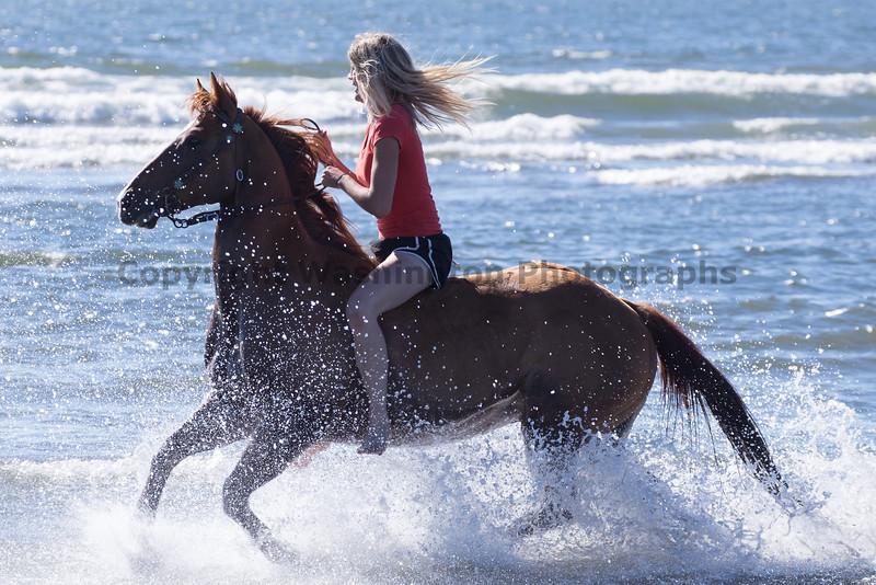 Long Beach Horseback Riding 24