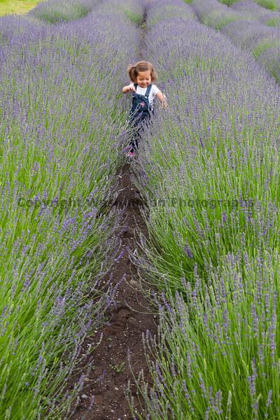 Lavender Farm 104