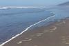 Kalaloch Beach 13