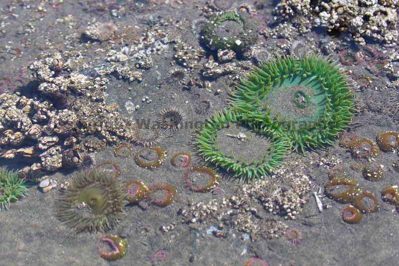 Ocean Beachcombing 52