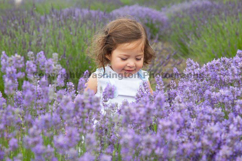 Lavender Farm 140
