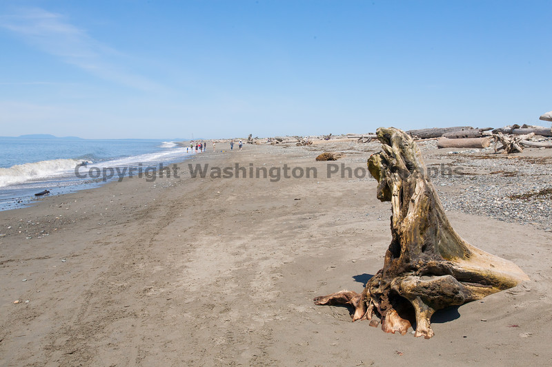 Dungeness Spit 28