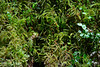 Hoh Rain Forest 156