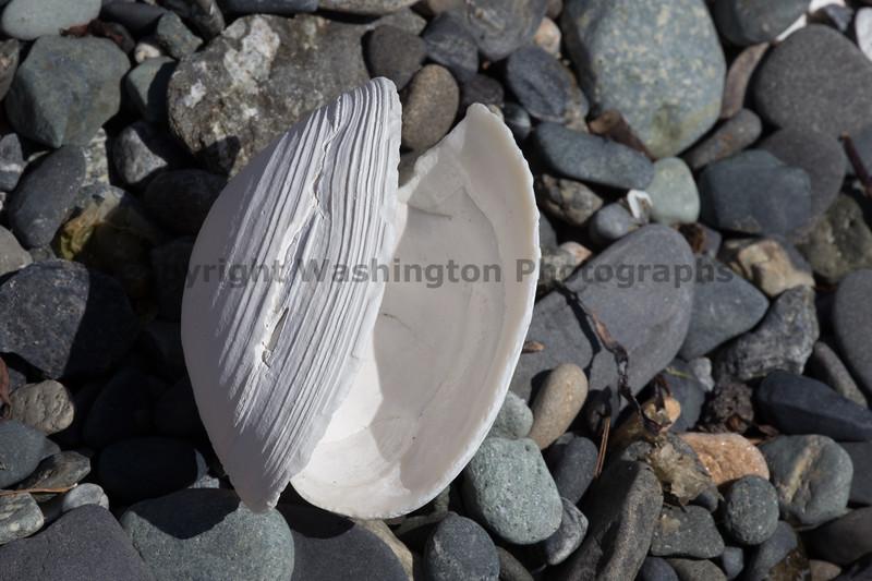 Ocean Beachcombing 18