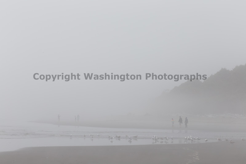 Kalaloch Fog 12