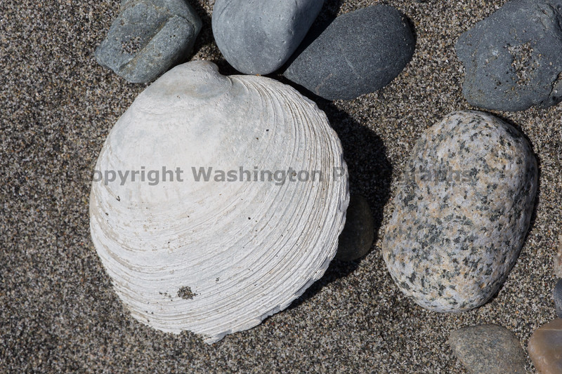 Beachcombing 16