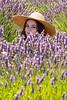 Lavender Farm 267