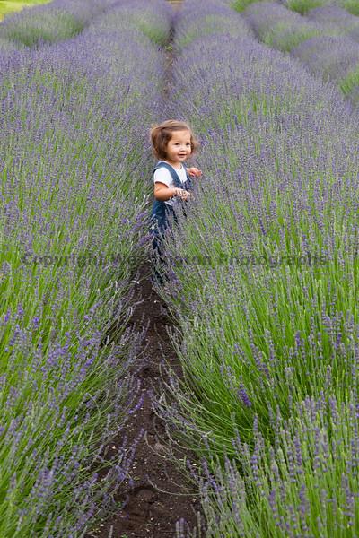 Lavender Farm 101
