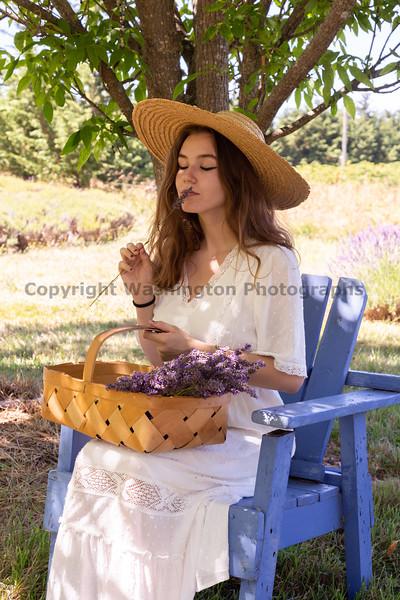 Lavender Farm 286
