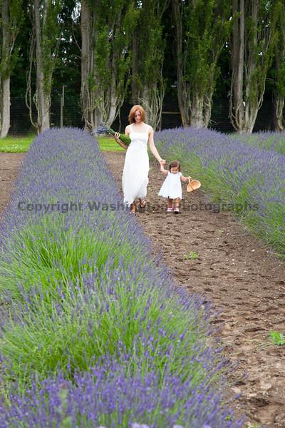 Lavender Farm 137